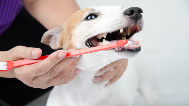 dog dental hygiene tips from the pet doctor in lakewood washington